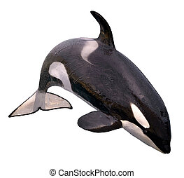 Isolated killer whale jumping - killer whale (Orcinus orca)...