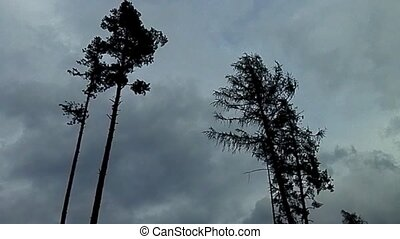 Two trees waving in the wind - The increasing wind before...
