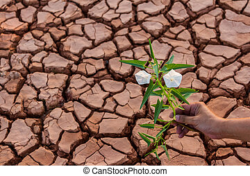 Small flower plant growing in dry soil with hand background