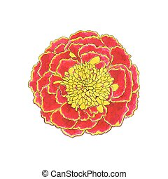 Marigold Hand-drawn flower Real watercolor drawing Vector...