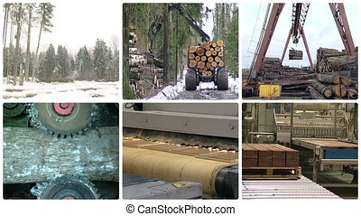 Timber lumber industry - Timber and lumber industry Tree cut...