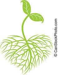 growing plant - a image of growing small plant