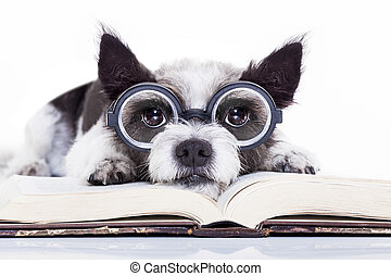 dog reading books - terrier dog reading a book with nerd...