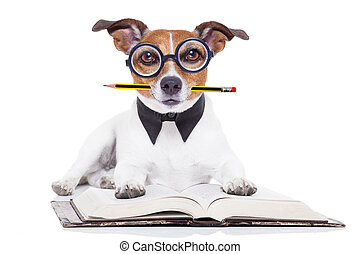 dog reading books - jack russell dog reading a book with...