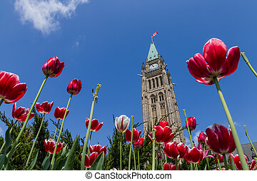 Tulip at Parliament Building Ottawa Canada