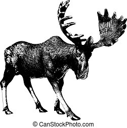 Big moose - Elk. Ink drawing. There is an option in the...