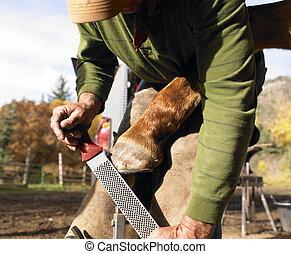 Farrier Filing Horse Hoof - Farrier filing horse hoof....