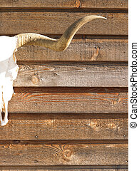 Cow Skull - Cropped view of horned cow skull hanging on wood...