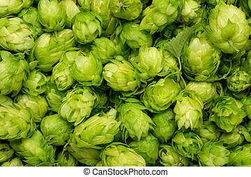 Fresh green hops on a wooden table.