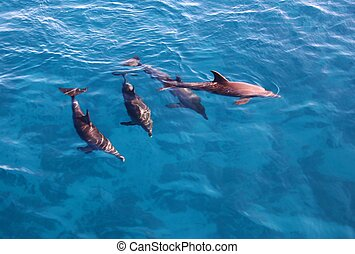 Group of dolphins in the sea - Group of playful dolphins in...