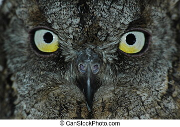 Owls face - Owl symbol of wisdom Close-up bright eyes on...