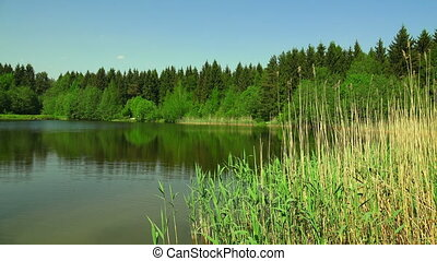 Lake in the forestShot in 4K ultra-high definition UHD, so...
