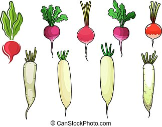 Red radishes and white daikon vegetables - Crispy red and...