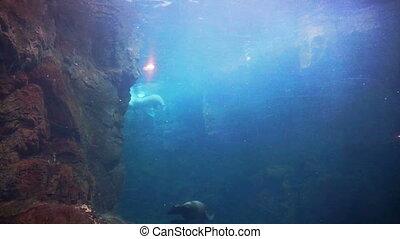 seals swimming aquarium glass