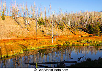 Madison river in Yellowstone national park in autumn time