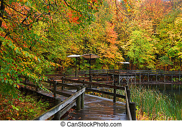 Board walk through colorful trees - Colorful autumn trees by...
