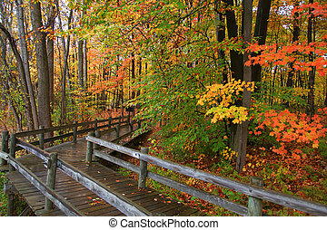 Autumn board walk - Colorful autumn trees by the board walk