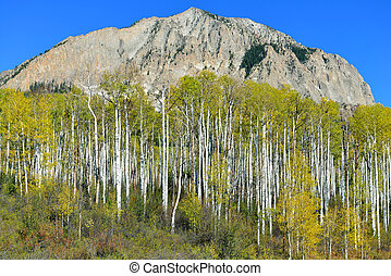 Alpine scenery of yellow and green aspen and mountains...
