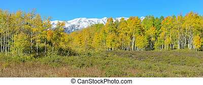 panoramic view of alpine scenery of yellow and green aspen...