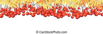 Rowan Border - Autumn Banner With Rowan Leaves and Berries...