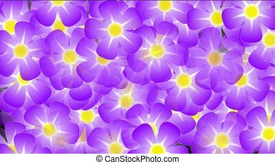 violet daisy background