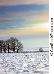 Winter morning scene with trees.