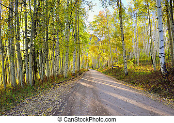 rural road with tall yellow and green aspen during foliage...