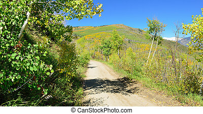 road through the yellow and green aspen during foliage...