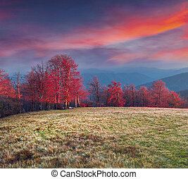 Colorful autumn sunset in the Carpathian mountains. Krasna...