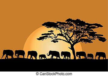 Herd of elephants - Herd of African elephants silhouettes at...
