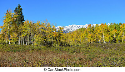 panoramic alpine scenery of yellow and green aspen and snow...