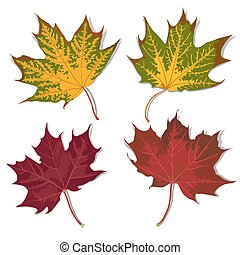 Set of leaves - Set of autumn leaves of different color