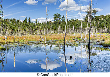 Beaver Pond with White Billowing Clouds Reflecting in the...