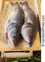 Seabass - Two Seabass  fish on silver tray close up