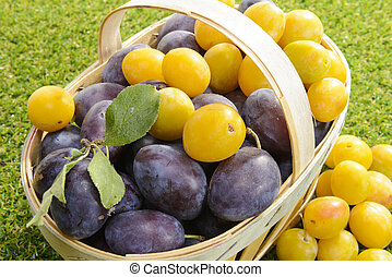 plums in a basket on the grass