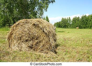 Hay bail harvesting in sunny day