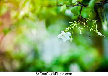 Macro of Mok flowers