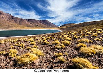 Meniquez Lagoon - The Meniquez Lagoon in the Atacama Desert,...
