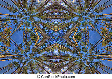 symmetrical view of trees from below