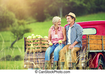 Couple harvesting apples - Senior couple sitting in a truck...