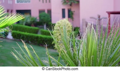 part of the territory of the hotel building with green palm...