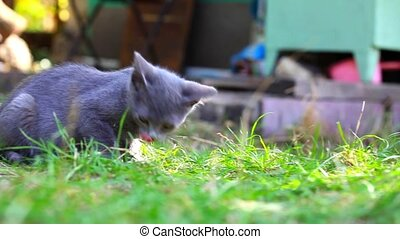 cats playing on farm garden summer grass