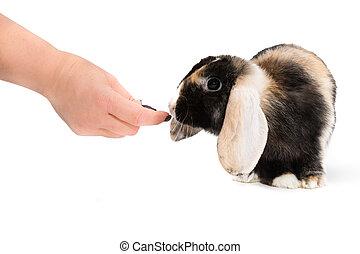 alimento, para, Animais estimação,