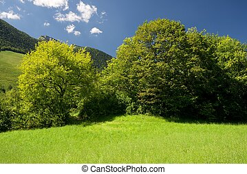 Pyrenees - Mountain and meadows in Aspe Valley, France