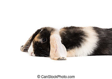 depressed or time out - bunny lying on white floor against...