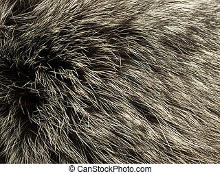 Beautiful fur of polar Fox
