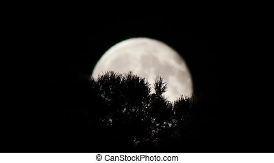 Full moon in the night sky over the trees - Full Moon in a...