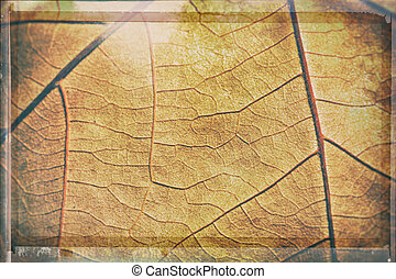 Abstract background - detail of autumn leaf
