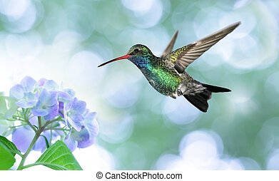 Dreamy image of a Ruby-throated Hummingbird - Ruby-throated...