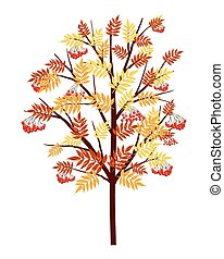 Autumn Rowan Tree With Leaves and Berries on White...